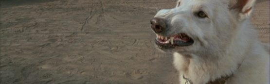 """""""Cão Branco"""" – O lado perverso do ser humano"""